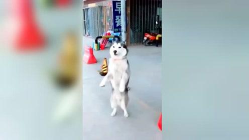 现在宠物们也得跟得上潮流,一个比一个嗨!