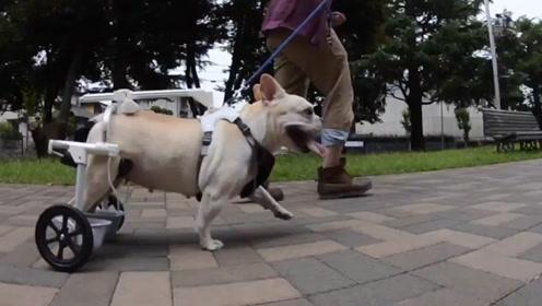 国外牛人发明狗狗专用轮椅,AI技术为汪星人带来福音