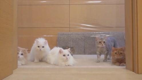 为什么猫咪的胡子不能剪?它有4个作用,看完更懂喵星人