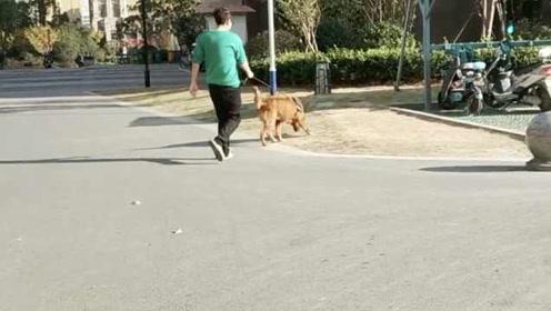 合肥拟禁16岁以下单独遛狗,犬只伤人纳入信用记录