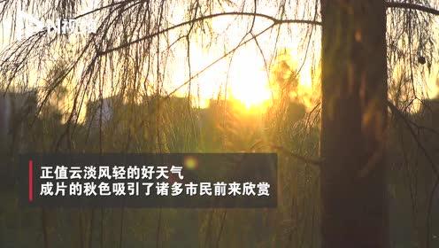 落羽杉惊艳眼球!打卡广州唯美秋色随手拍高清美图,效果堪比单反