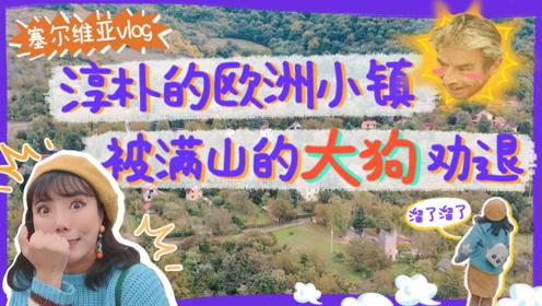 对中国人超友好的欧洲小镇,满山都是大狗?