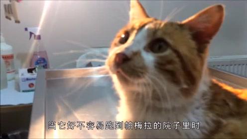 街头流浪猫身受重伤,路人无人问津,最后被好心女子带回家