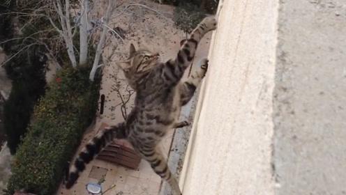 异常惊险的一幕,猫咪不慎从27层高楼摔下,下一秒人们愣住了