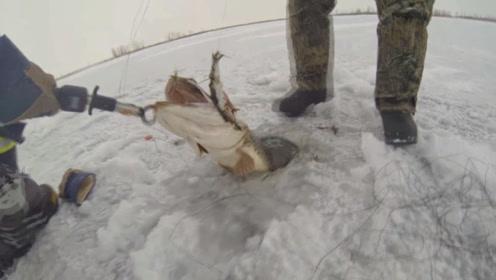 男子在冰面上钓鱼,以为鱼上钩了,拉上来一看太高兴了!