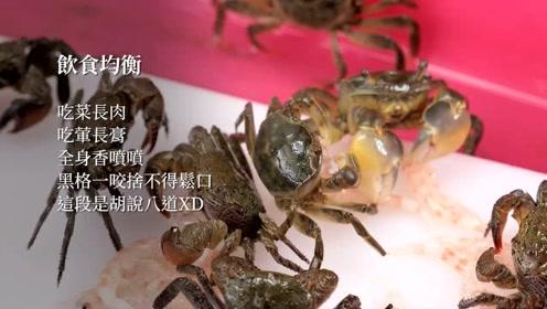 干货!前打钓鱼,各种适合钓鱼的小螃蟹的介绍以及如何喂养