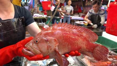 香港鱼市,老板宰杀几百块一条的红瓜子斑!