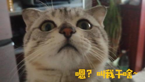 自从养猫之后,吃早饭就变得十分困难了,猫:铲屎的,你吃啥呢?