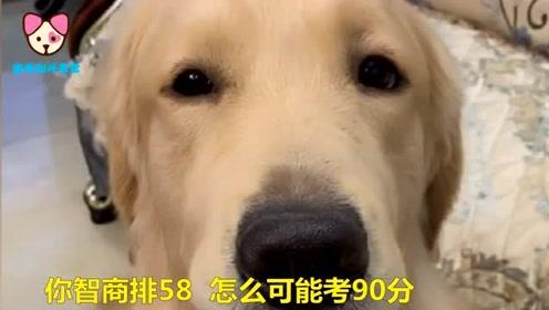 狗狗考试90分,结果回家被主人暴打一顿,看完我笑了