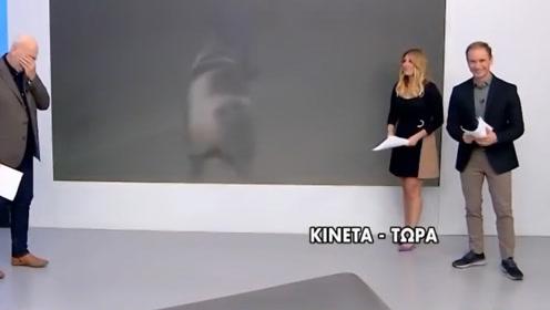 希腊记者小哥在直播时,被花猪疯狂示爱,网友:这也太帅了