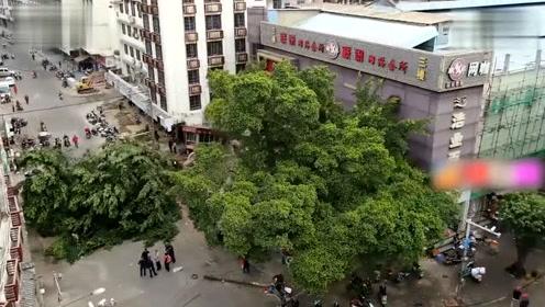 广西玉林街头一棵大榕树轰然倒下 连根拔起横路中