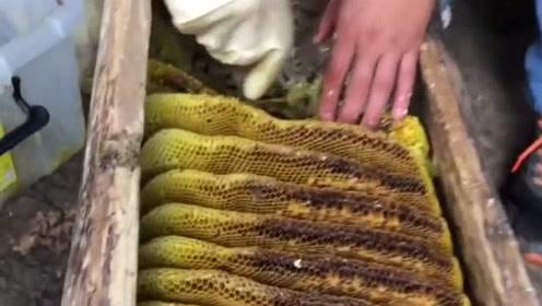 天然的蜂巢蜜,对鼻咽炎有很好的缓解和治疗作用,今天我就买点回家试试!