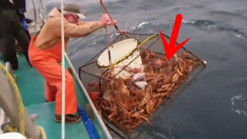提起捕鱼笼,里面全是帝王蟹,渔民这次发财了!