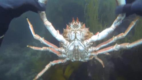 老外到海里游泳,意外抓到超大螃蟹,这下赚大了