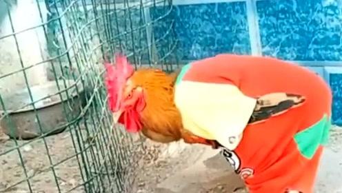 这鸡居然学会了太空步,谁说建国后不允许动物成精,已经打破了这个理论!