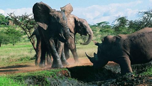 大象与犀牛狭路相逢,一场大战免不了要开始,镜头记录全过程
