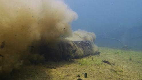 男子将毒蛇放进1800条水蛭池中,3分钟后的画面让他不忍直视!