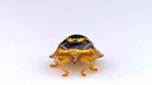 被黄金渲染的物种,人们用其做宝石,农村最容易见到