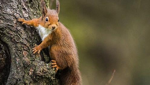 一场精彩至极的陆对空生死决斗,小松鼠最后能否逃过这一劫呢?