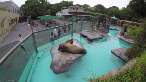 """大猩猩在游乐园想喝饮料,游客却没办法,猩猩指出了一条""""密道"""""""