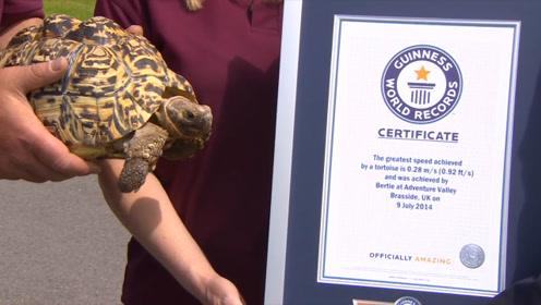 乌龟界的博尔特!美国乌龟飞速爬行,打破吉尼斯世界纪录