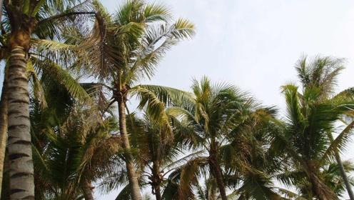 """世界上最""""不正经""""的树,不结果实反而产大米,还养活了数百万人"""