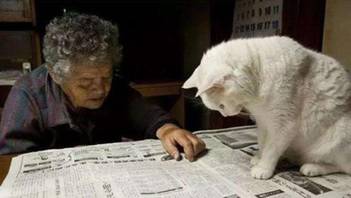 猫咪会死盯着某处看!老人这样回答,专家解释回复三个字