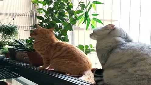 几只猫盯着我鸟笼一天了,它们还是很有眼光的,我这鸟笼可贵了!