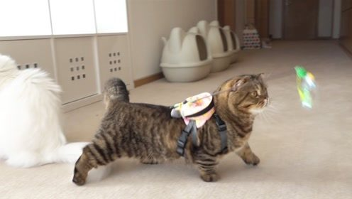 在猫咪身上绑着逗猫棒,它们会做出怎样的反应?差点就奔溃了