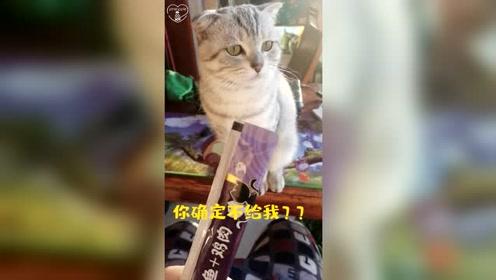 铲屎官拿零食逗逗小猫,猫咪的反应太有趣了:哼,我生气了!