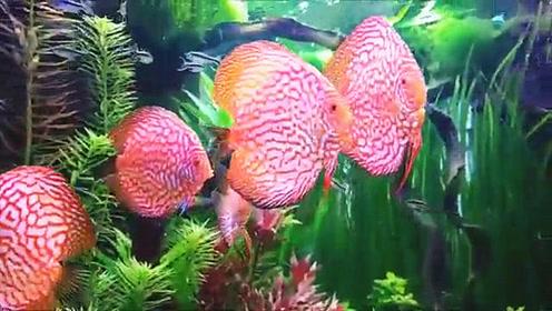 新开的七彩鱼缸,混养的宠物鱼正在嬉戏,瞬间就把人吸引住了