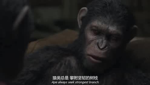 """猿类总是攀附坚韧的树枝""""帝王猴""""想法阻止""""猿先锋"""""""