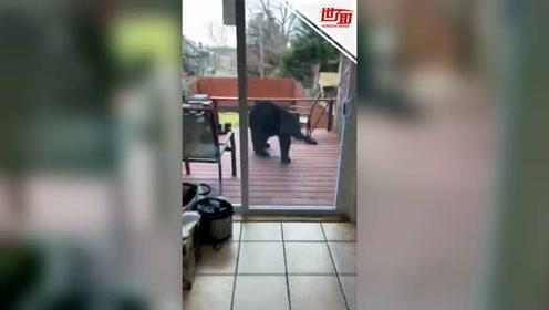 黑熊闯入居民后院 大哥吓得当场狂喊妈妈仿佛在rap