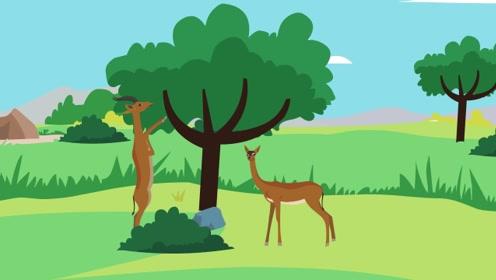 你知道世界上脖子最长的羚羊长什么样吗?