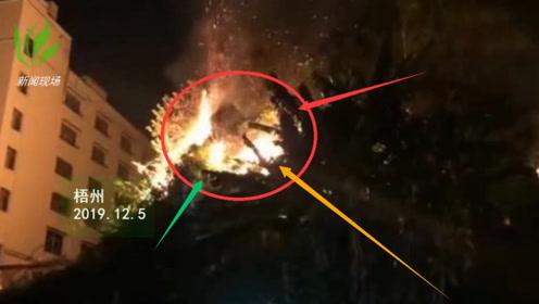突发!梧州狮卧山发大火 上百居民紧急转移