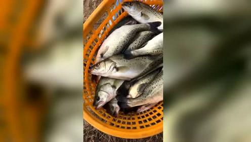 大胃王吃播 很多品牌店小店的酸菜鱼、烤鱼就是这种鱼加工的