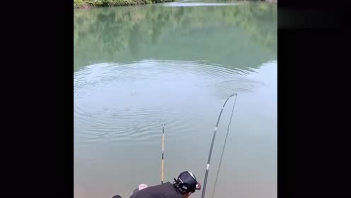 钓鱼:小伙手段果然高明,又中了一条巨获,提竿到手软