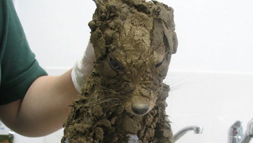 外国大叔在泥坑里捡了只狗,带回家洗了个澡,越看越提心吊胆!