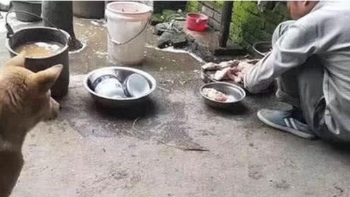 狗和鸡打完架后,看到主人把鸡宰了,接下来狗狗的反应把全家人都逗乐了