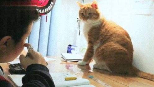 猫咪监督小主人写作业,一脸认真的样子,比家长还负责