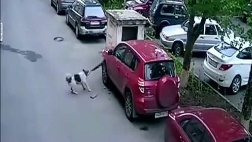 很好奇车主是怎么和汪星人结下梁子的,报复来的太快了!