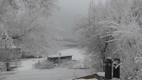 冬天树木如何进行光合作用,专家分析植物冬眠,靠这些方法过冬!