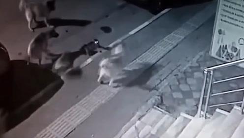 6条狗 vs 1只猫,这结局……