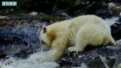 """熊妈深知授之以鱼不如授之以渔的道理!亲子课程对""""熊孩子""""很重要!"""