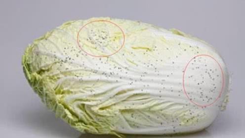 """大白菜上的""""小黑点""""到底是什么?能不能吃?早知道不吃亏,抓紧看看"""