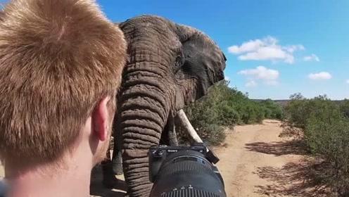 摄影师偶遇象群被近距离围观6分钟 吓到全身发抖