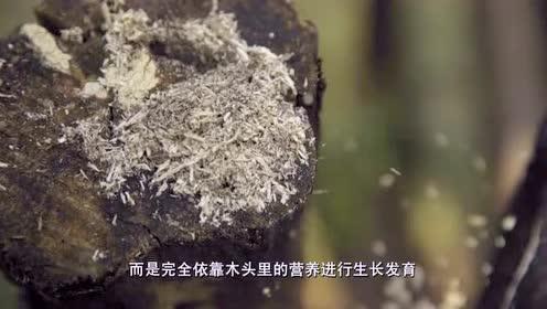 《舌尖上的中国》:十几种菌类吃法各不相同!看饿了!