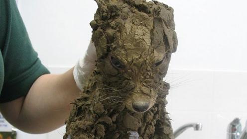 外国好心人在泥坑里救了一只狗,带回家洗干净后,怎么越看越慌?