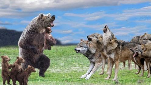 棕熊抢夺食物,3匹野狼都拿它没办法,原来这才是棕熊的真正实力