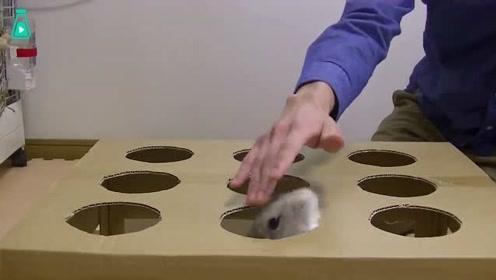 """真兔子版""""打地鼠""""探头探脑的兔兔,也太可爱了"""